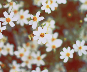 flower, flowers, and white image