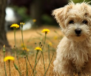 doggy, puppy, and flowers image