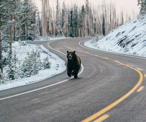 bear, nature, and winter image