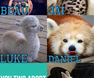 animal, imagine, and llama image