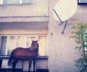 budapest, horse, and house image