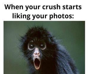 crush, facebook, and monkey image