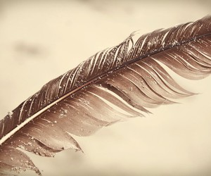 beach, feather, and bird image