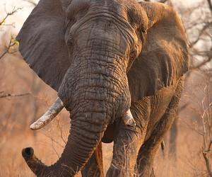 animal, animals, and beauty image
