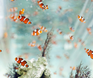 fish, nemo, and water image