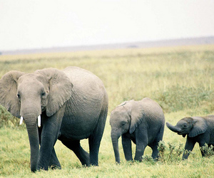 elephant and cute image