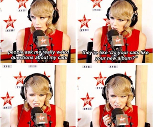 Taylor Swift, cat, and funny image