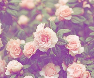 background, beautiful, and floral image
