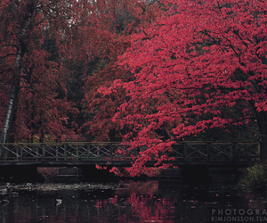 autumn, red, and beautiful image