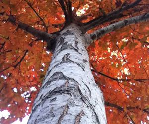 branches, fall, and fun image