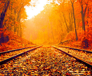 bright, fall, and colors image