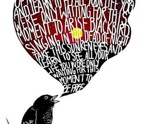 blackbird, beatles, and Lyrics image