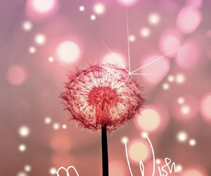 wish, pink, and Dream image