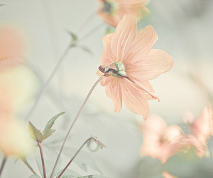flowers, pastel, and soft image