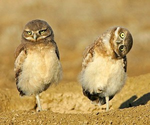 owl, bird, and funny image