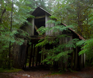 abandoned, cabin, and forest image