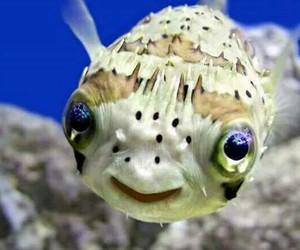 fish, smile, and animal image