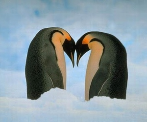 love and penguin image
