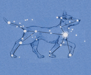 constelation, dog, and canis major image