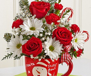 christmas flower cup image