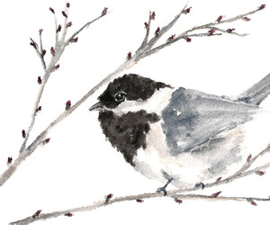 birds, chickadee, and christmas image