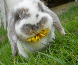 bunny, dandelion, and grass image