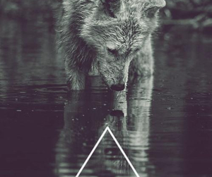 wolf, hipster, and triangle image