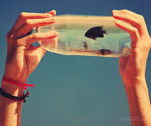 fish, bottle, and hands image