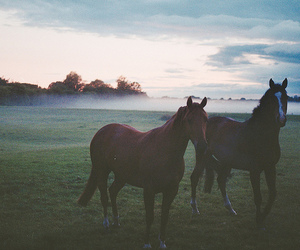 horse, animal, and fog image