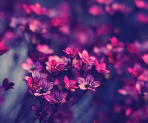 background, flowers, and lilablau image