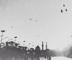 birds, city, and black and white image