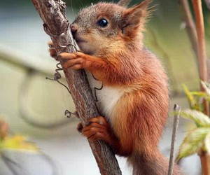animal, squirrel, and cute image
