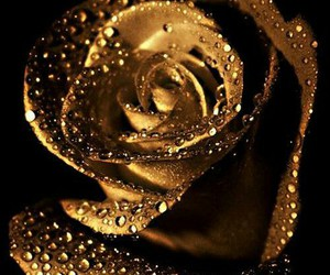 gold, flowers, and rose image