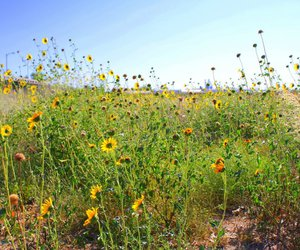 field, wildflowers, and flowers image