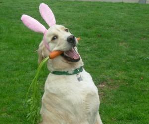 dog, bunny, and easter image