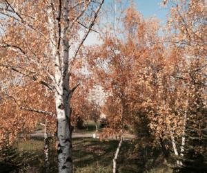 autumn, fall, and coloured leaves image