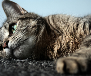 cat, beautiful, and photography image