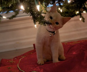 cat, cosy, and christmas image