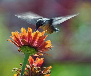 bird, flowers, and flower image