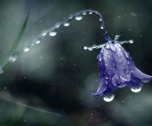 bluebell and fantasy image