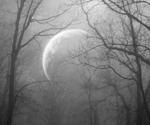 moon, forest, and night image