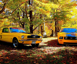 ford, Motor, and mustang image
