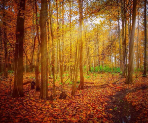 autumn, forest, and sun image