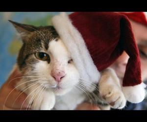 beautiful, cat, and christmas image