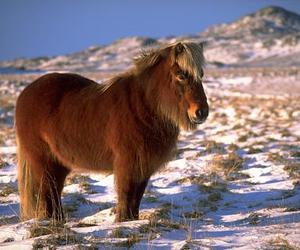 horse, winter, and cute image