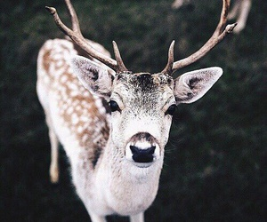 animal, deer, and nature image