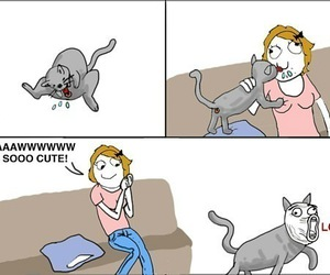 lol, funny, and cat image