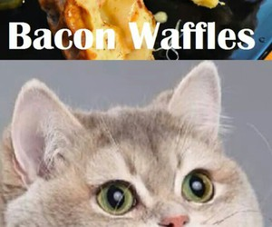 bacon, cat, and grilled image