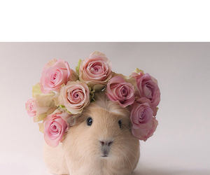 background, flower, and guinea pig image