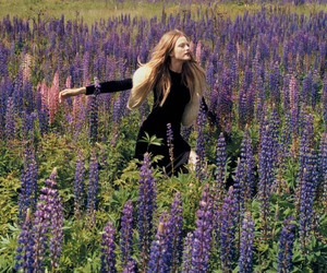 field, flowers, and lavender image